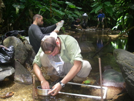 Collecting samples of aquatic insects